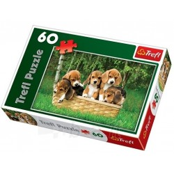Puzzle 60 piese -  Beagle Puppies